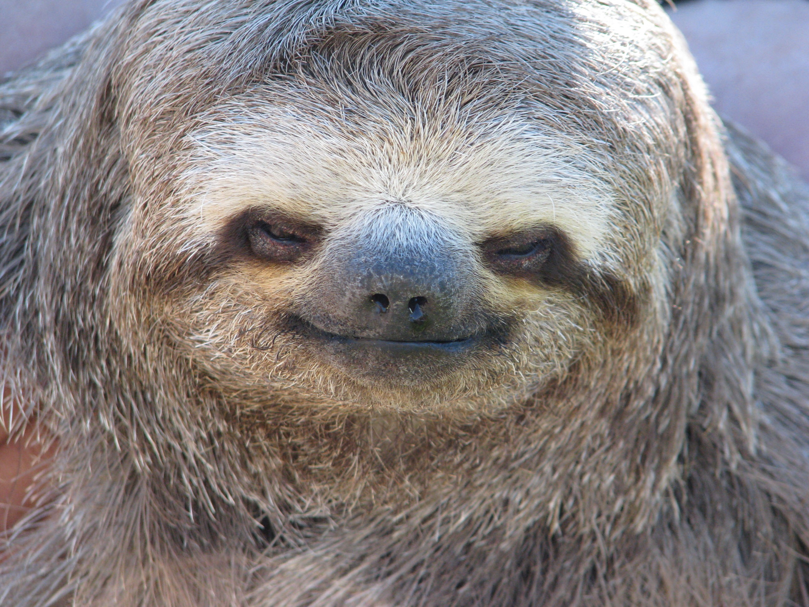 Sloths are so creepy. Slow and creepy. At least my computer is just slow. (pic of creepy sloth)